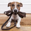dog_lead