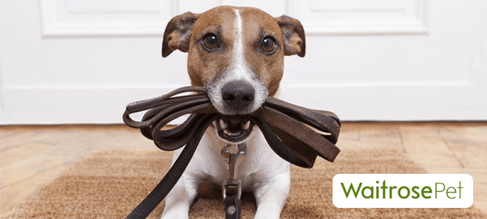 CharityTuesday – today it's one for pet lovers! Waitrose Pet ...