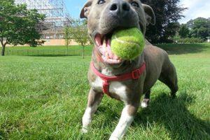 photoBg_dog-tennisball